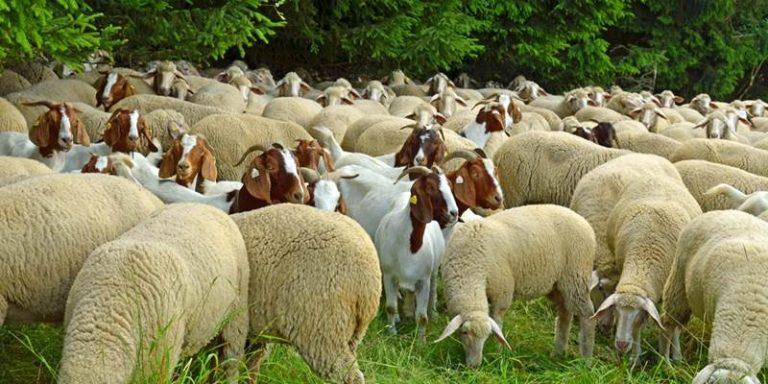 Sequestro sanitario di un allevamento nel Vibonese
