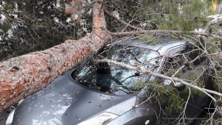 Tragedia sfiorata a Piscopio, albero crolla su un'auto nei pressi di un funerale (FOTO-VIDEO)