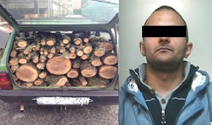 Taglia quercia e ruba la legna, arresto convalidato a Vibo e rimessione in libertà