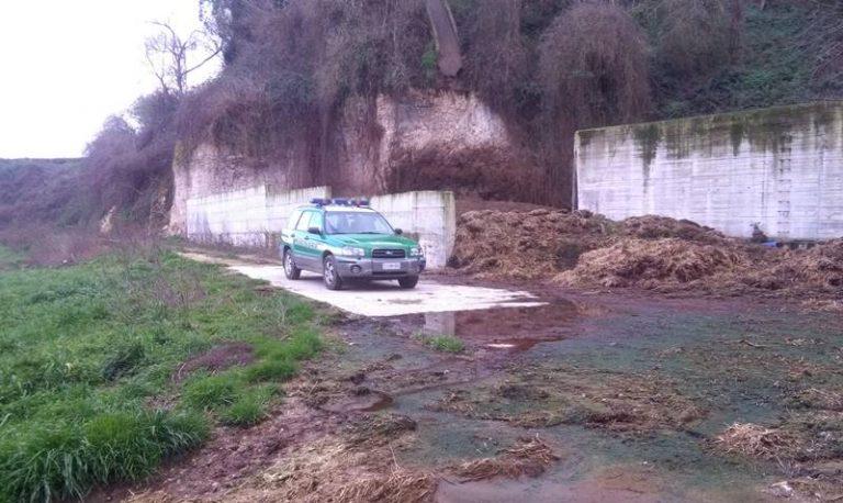 Sversava liquami zootecnici nella fiumara Ruffa, denunciato un allevatore di Spilinga