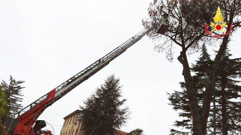 Pino pericolante nel cortile della scuola materna, intervento dei Vigili del fuoco a San Costantino