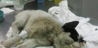 Cucciolo salvato a Portosalvo