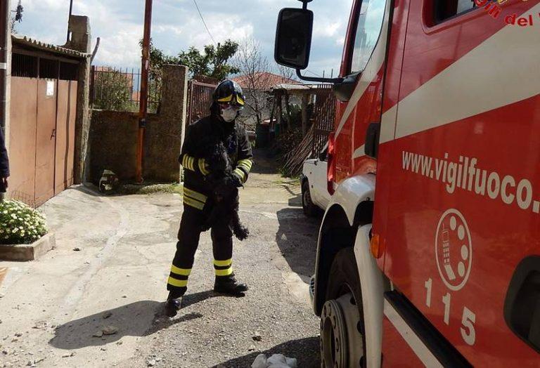 Paura a Mileto, incendio distrugge abitazione: i Vigili del fuoco salvano un cagnolino