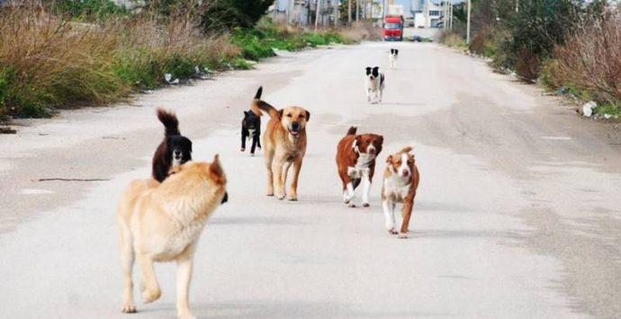 """Cani avvelenati a Serra, la """"strage"""" silenziosa continua"""