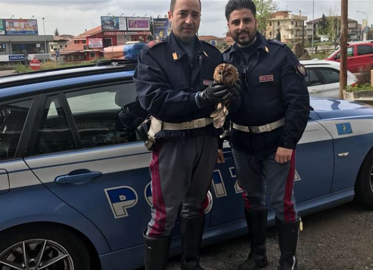 Allocco salvato dalla polizia sull'autostrada all'altezza di Sant'Onofrio