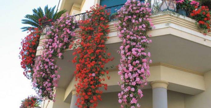 """A Vibo sfida con piante e fiori: al via il concorso """"Balconi di primavera"""""""