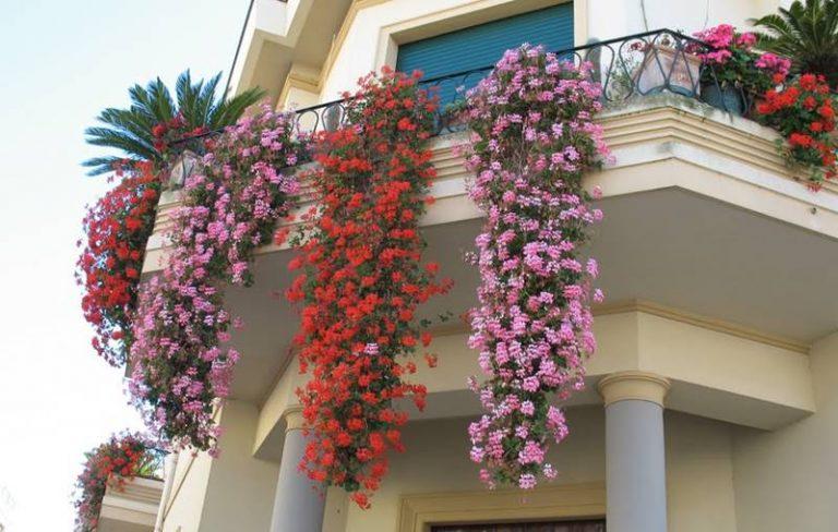"""Decoro urbano, a Vibo tornano i """"Balconi fioriti"""""""