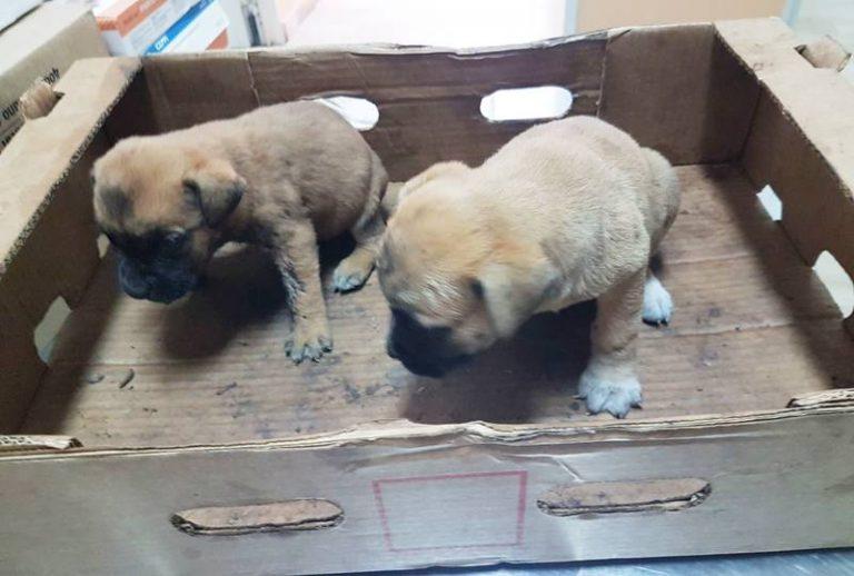 Cuccioli abbandonati lungo la Statale 18: recuperati dalla Polizia stradale