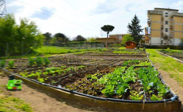 """Svolta """"green"""" a Vibo, predisposto il regolamento per gli Orti urbani"""