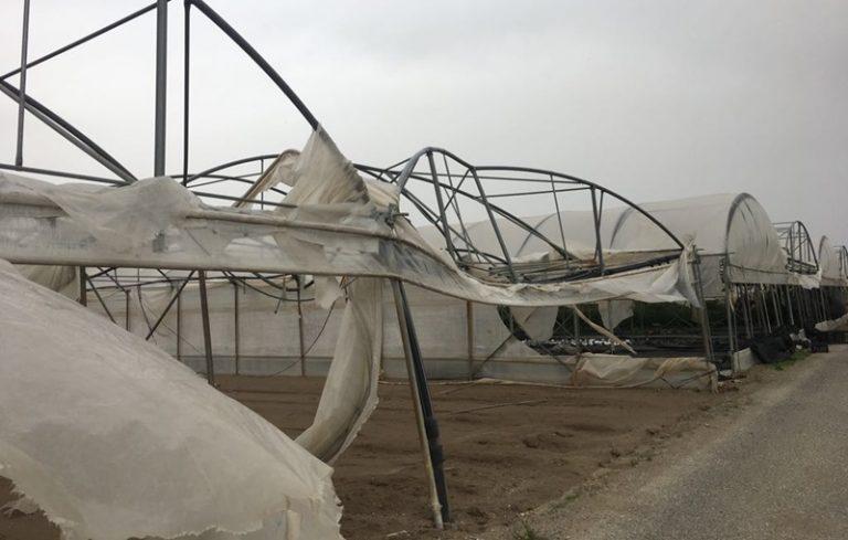 Le serre di Pizzo strappate dal vento, aziende in ginocchio dopo la tempesta (VIDEO)