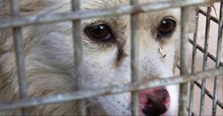 """La Lav promuove il """"banco farmaceutico"""" e denuncia: «Costi spropositati per curare gli animali»"""