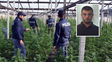 """Narcotraffico: giudice incompatibile per """"Giardini segreti"""", processo rinviato a Vibo"""