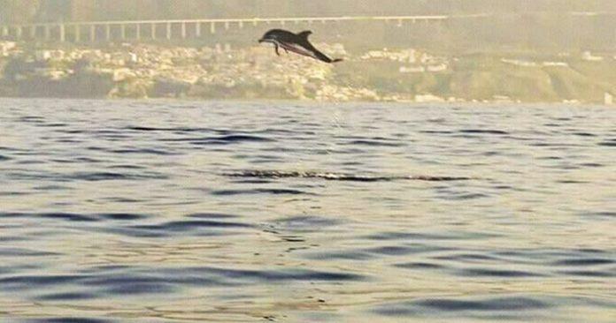 Delfini a Pizzo