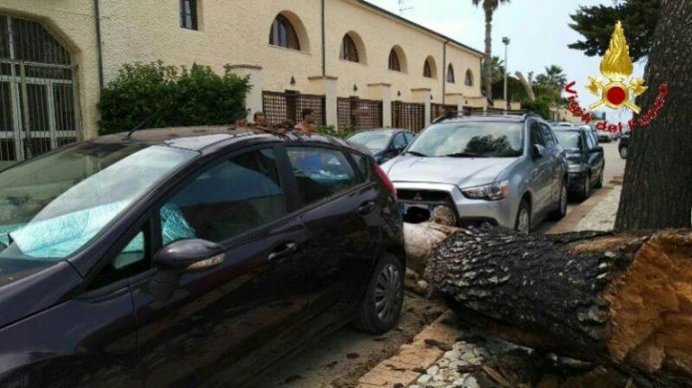 Tragedia sfiorata a Sant'Irene, albero si schianta al suolo
