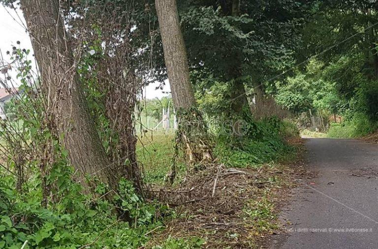 Grave incidente a Pernocari, auto esce di strada e finisce contro un albero
