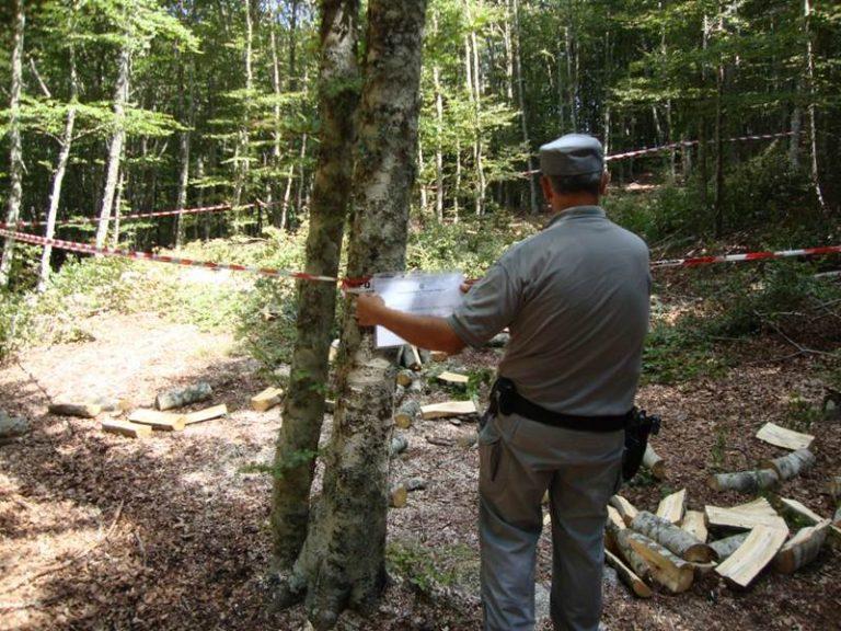 Taglio abusivo di cento quintali di legna, un arresto nelle Serre