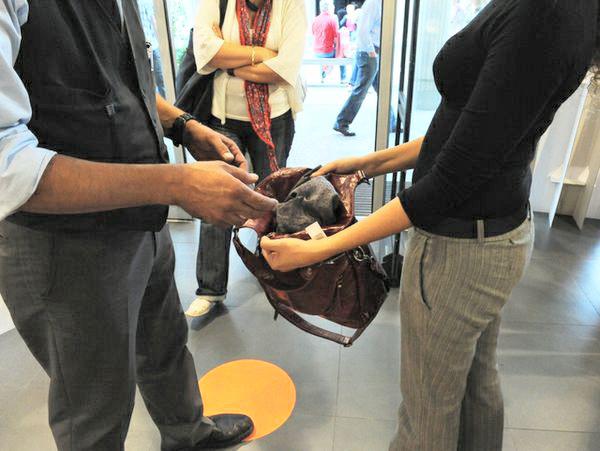 Troppi furti in negozio, erborista tropeano costretto a chiudere bottega