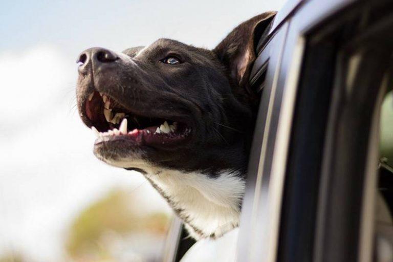Cani affacciati al finestrino e bambini nel portabagagli, raffica di multe a Vibo
