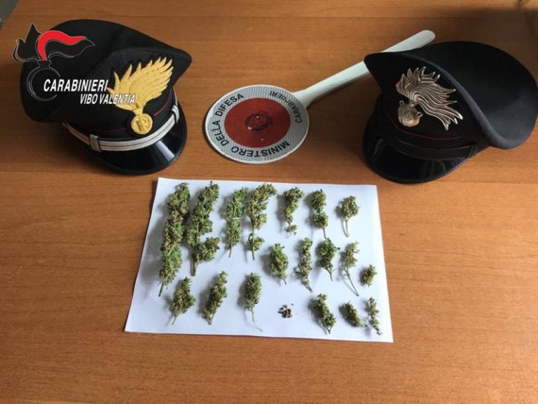 Infiorescenze di marijuana nascoste in una stalla, tre denunce a San Nicola da Crissa