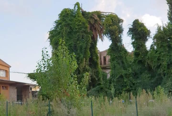 """Il palazzo non c'è più ma la """"vergogna"""" rimane: il centro di Vibo come un """"orto botanico"""""""
