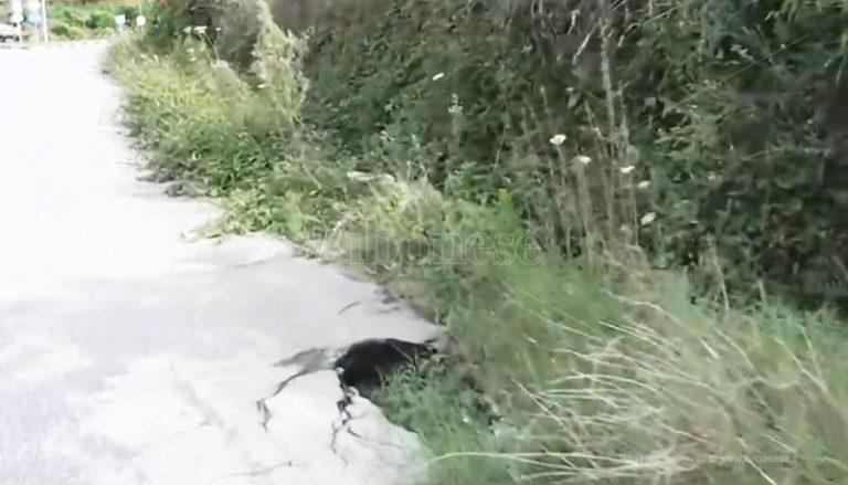 Piscopio, la frazione è abbandonata e le strade diventano una trappola (VIDEO)