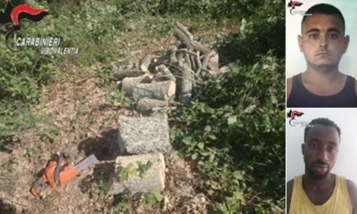 Tagliavano querce per legna da ardere, due arresti a Ricadi