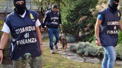 Narcotraffico dal Vibonese: in 26 colpevoli in Cassazione per l'operazione Stammer