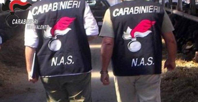Serra, controlli nell'ambito della Festa del fungo: denunce e sequestri dell'Arma
