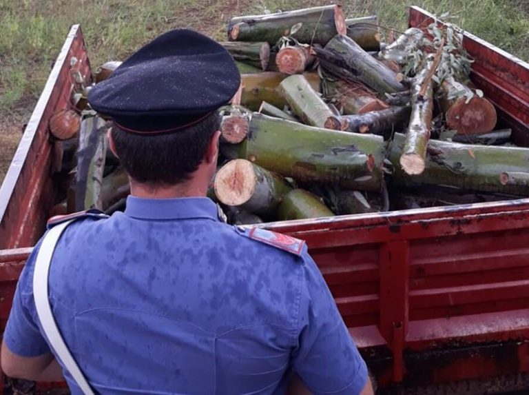Tagliavano legna in Parco naturale delle Serre, tre arresti
