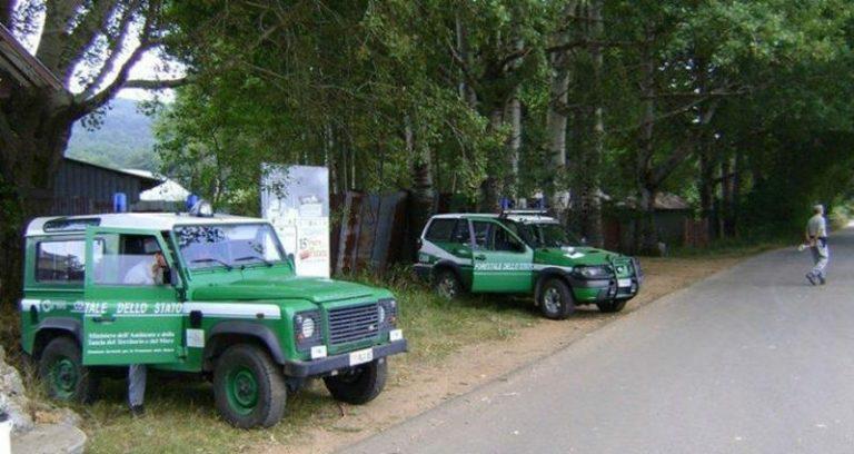 Tagliano 45 pini larici in Parco delle Serre, due arresti