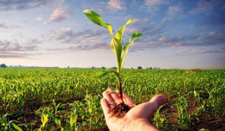 Bandi Gal, 40 aziende agricole a Spilinga per i decreti di finanziamento