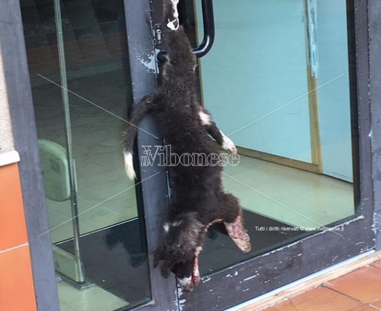 Cane impiccato a Vibo dinanzi a negozio, indagano i carabinieri – Video
