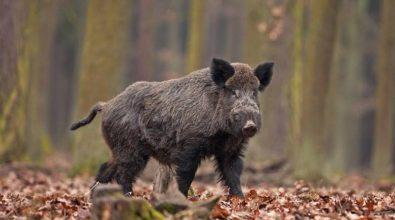 «L'ultima di Spirlì: a caccia e a pesca per prevenire il virus»