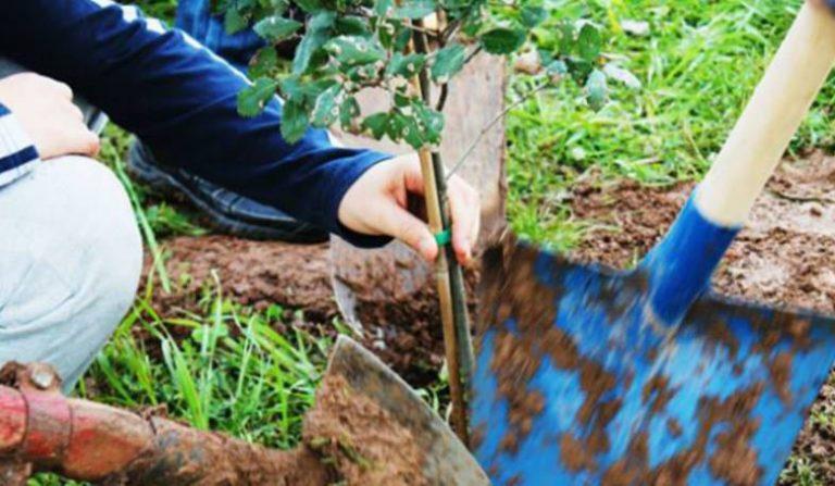 Festa dell'albero, le iniziative del fine settimana a Vibo Valentia