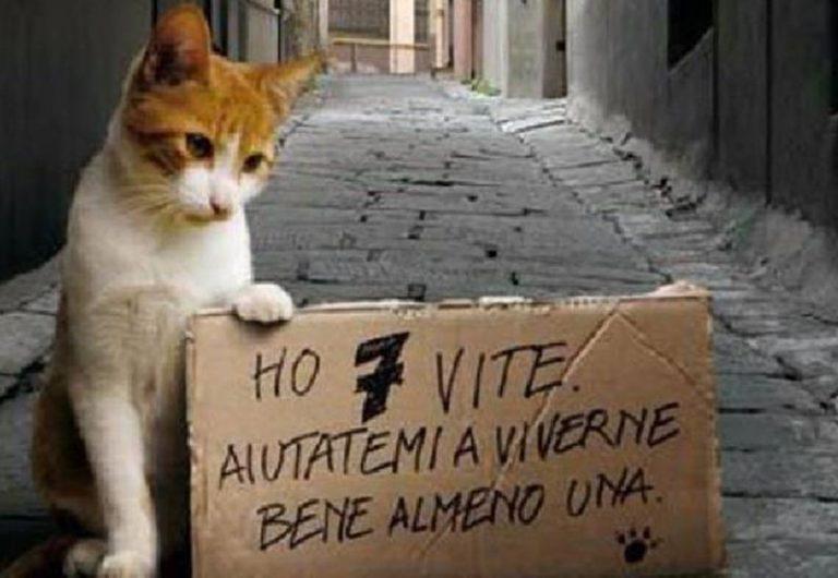 Gatti avvelenati a Tropea, la denuncia della Lav