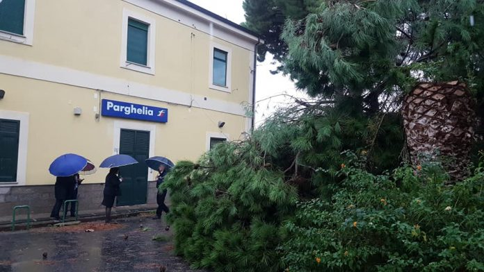 Il pino caduto a Parghelia (foto Piserà)