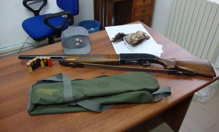 A caccia nel Parco naturale delle Serre, sequestri e denunce