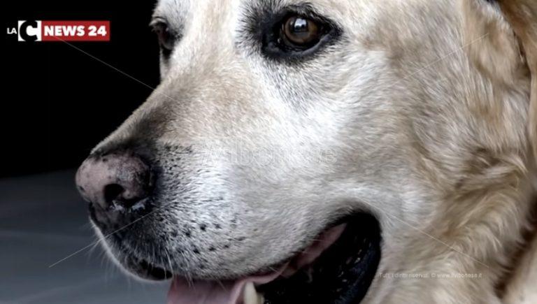 Vibo e le storie del 2018: Dylan, il cane che ha commosso il web – VIDEO