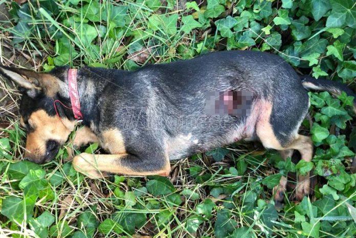Il cagnolino ucciso a Vibo