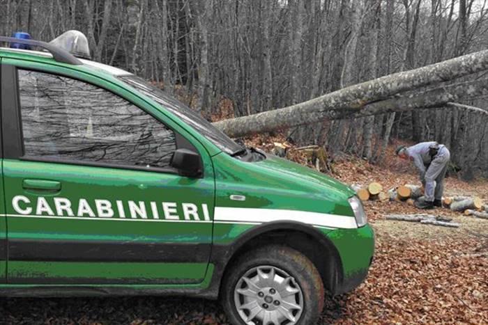 Tagli abusivi nel Parco delle Serre, Pellegrino: «Bene l'azione dei Carabinieri Forestali»