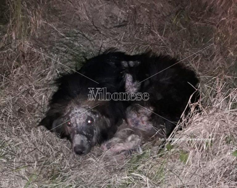 L'odissea passata dai volontari dell'Enpa per salvare due cani – Foto