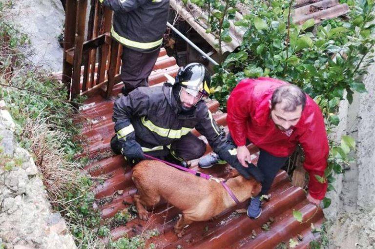 Cane bloccato su una tettoia recuperato dai Vigili del fuoco a Vibo