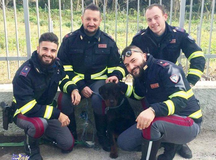 Il rottweiler salvato dalla Polstrada di Vibo
