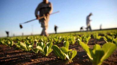 Agroalimentare, Csqa e Igea insieme per il Biologico – Video