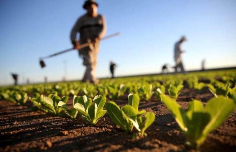 """Aziende agricole, nuovi sostegni economici grazie al Gal """"Terre vibonesi"""""""