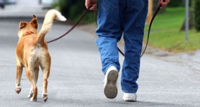 Tropea, una taglia sui proprietari dei cani che sporcano