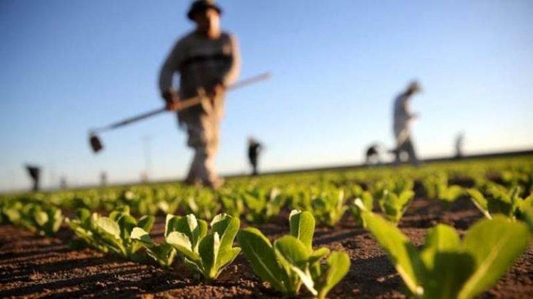 Sostegno alle imprese agricole, il Gal approva le graduatorie provvisorie