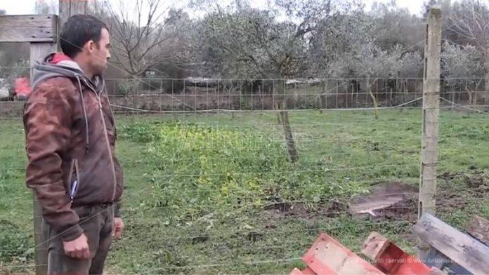 Daniele Cullia nel posto in cui è stato ucciso il cavallo