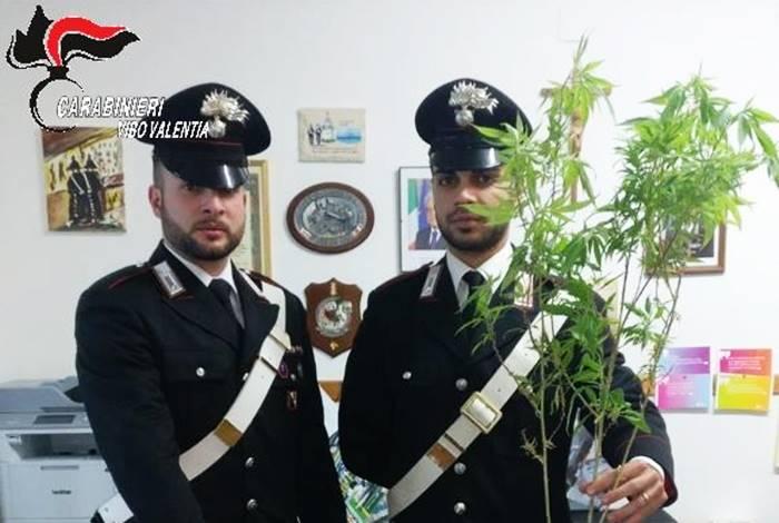 Piantine di cannabis sul tetto, un arresto a Ricadi