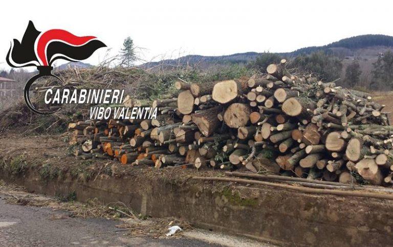 Tagliano 40 pini senza autorizzazione, sanzionati per oltre 30mila euro a Sorianello